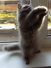 Сказочный мультяшный котенок